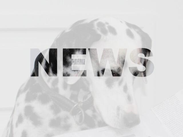 News aus dem Tierheim Chemnitz