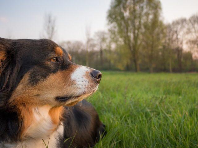 Hunde im Tierheim Chemnitz