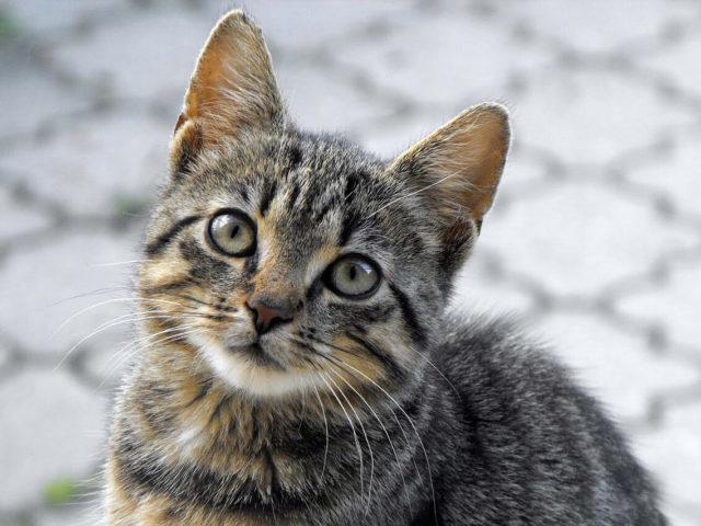 Katzen im Tierheim Chemnitz