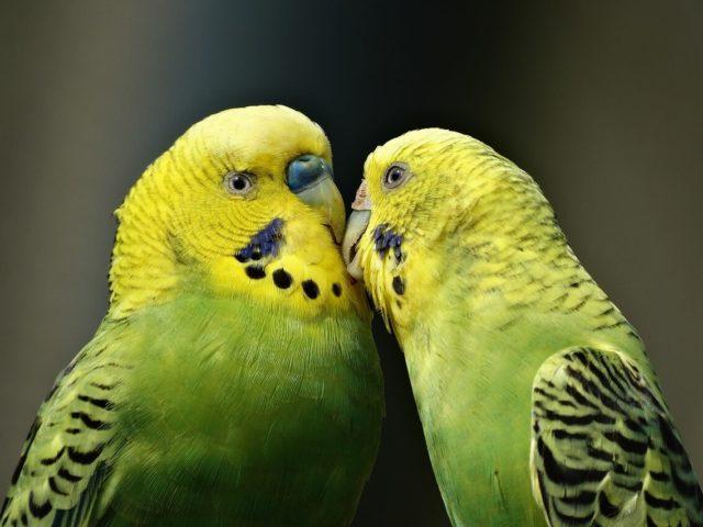 Vögel im Tierheim Chemnitz